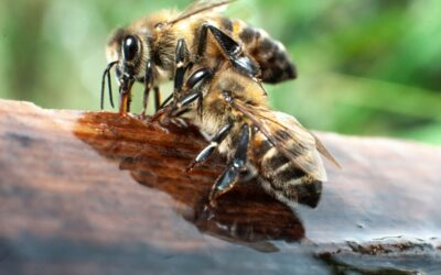 Bee swarm invades Huntington Beach home